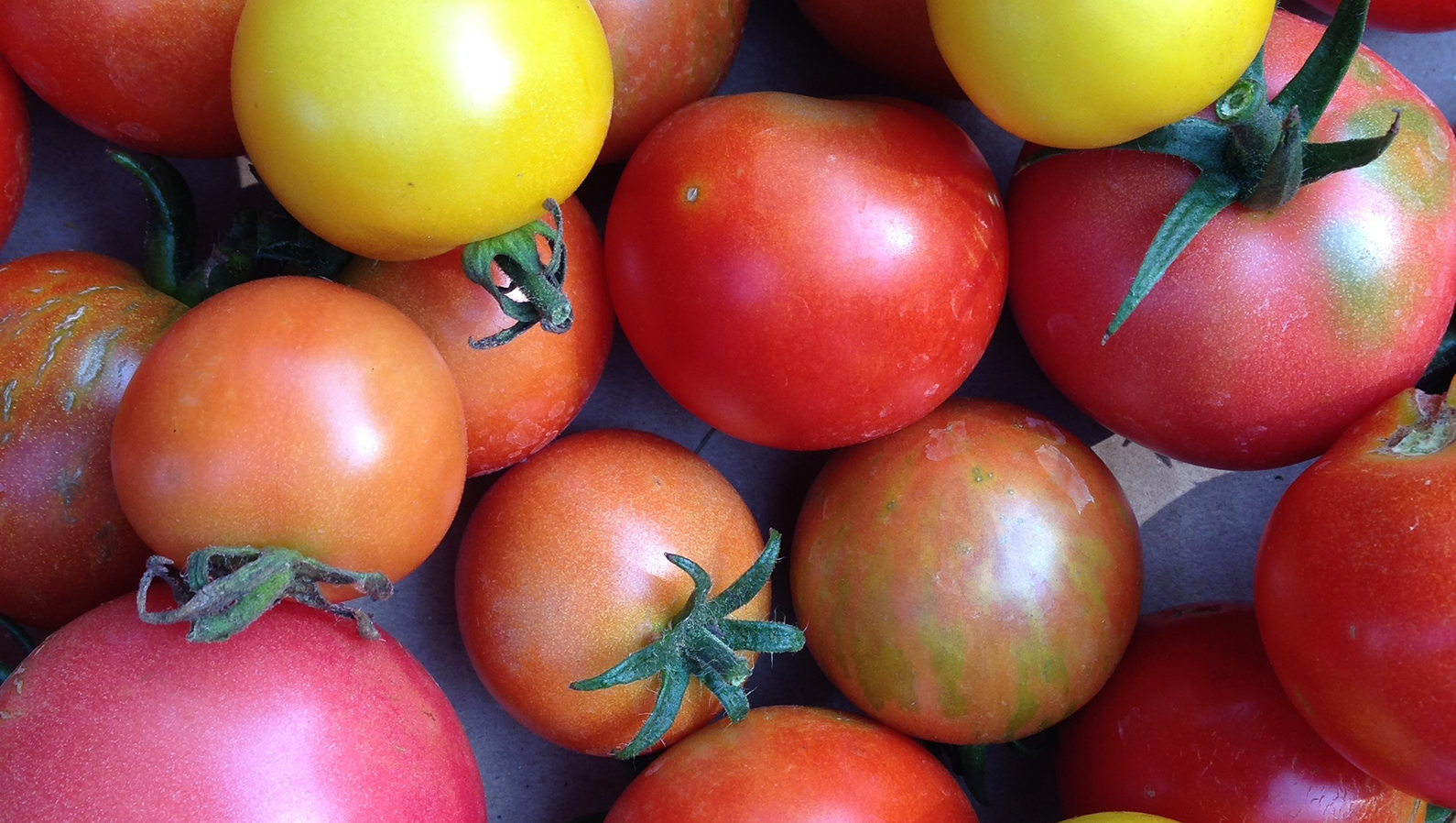 vera_tomat